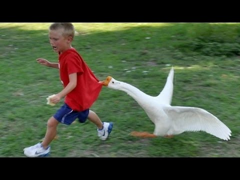 Funny Animal Vines Compilation 2016 | Try Not To Laugh Challenge | Funniest Animal Videos