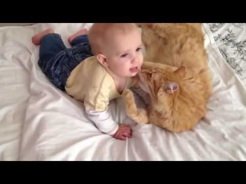 Funny cats Video 2017  – Cute and Funny Babies Laughing At Cats Compilation