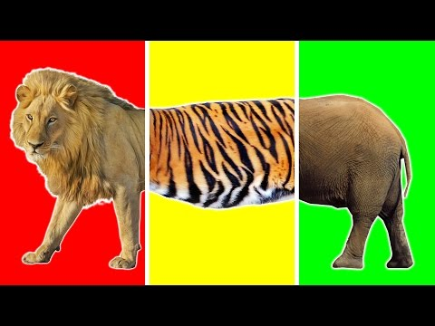 Wild Animals with Wrong Body | Funny Animals Video for Kids | Learn Wild Animals