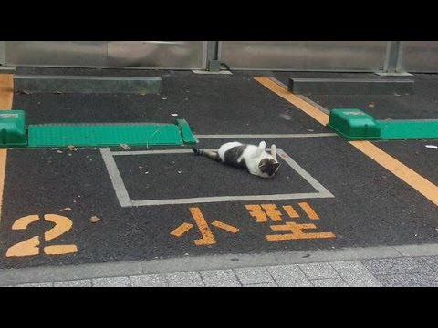 なぜそこに!?  いろんな場所にいる猫が可愛い!Funny cats♡