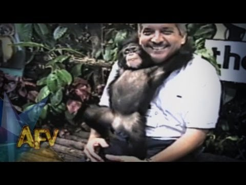 Funniest Zoo Animals Get Personal | Animals | AFV