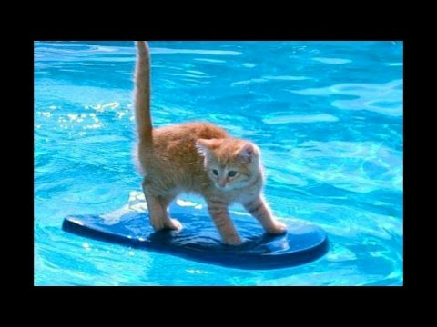 Cats Hate Falling in Water 2017 – Try not to laugh – Funny cats falling into water Part 3
