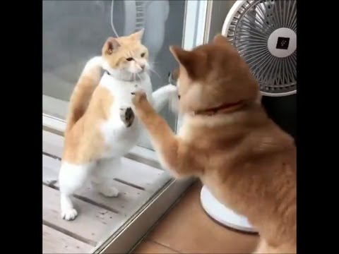 Funny Cats Video 2017#9