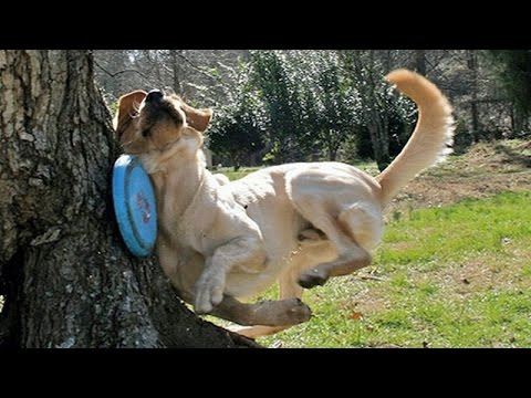 Animals are so funny they should be called funnymals – Funny animal compilation