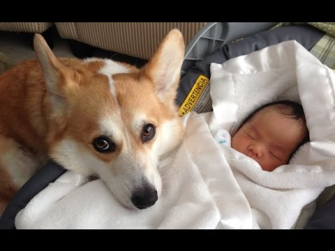 Funny Dogs Protecting Babies Compilation 2017