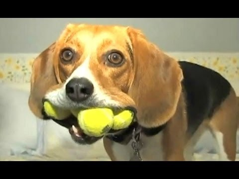 TOP Funny A Funny Dog Videos FUNNY VIDEO
