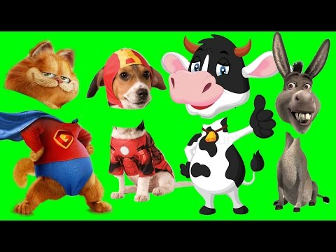 Wrong Heads, Bad Baby ? Cute Farm Animals with Wrong Heads | Funny Animals Video for Kids