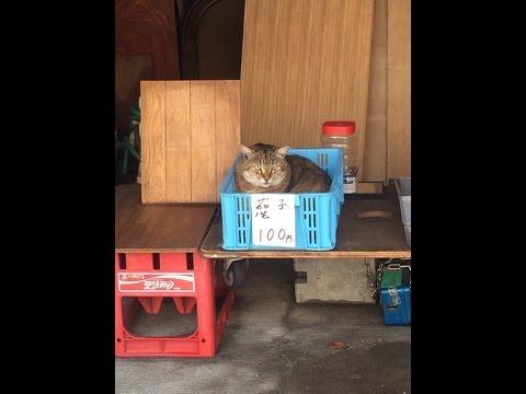 まるで人間!買い物をしたい猫たちが可愛い!!Funny cats♡
