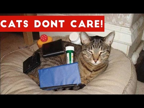 Cats Don't Care Funny Pets Videos   Best Funny Cat Videos Ever
