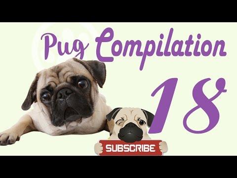 Pug Compilation 18 – Funny Dogs Compilation 2017 | Best Funny Dog Videos Ever