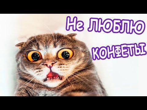 Моя кошка не любит конфеты Приколы про кошек Funny cats Валера ТВ