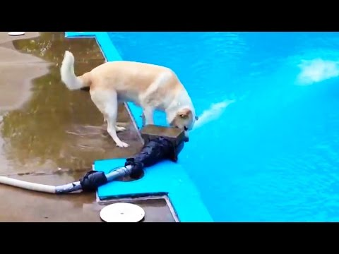 DOGS LOGIC ? Funny Dogs Video [Funny Pets]