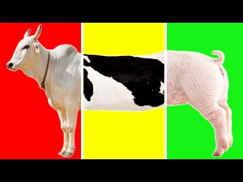 Learn Farm Animals with Wrong Body | Funny Animals Video for Kids |  Farm Animals Name and Sound!