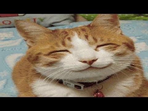 Смешные коты 2017 МАЙ | ТОПовая Подборка. Лучшие Приколы с котами | Funny Cats Complation 2017 #55
