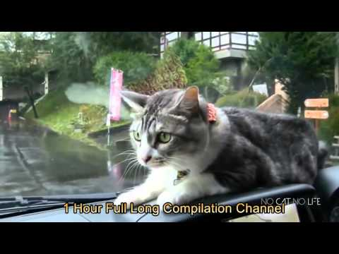 Funny Cats Compilation (Most Popular)1 Hour Long Cats Compilation