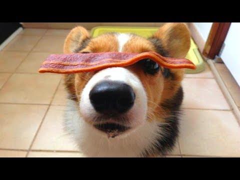 FUNNY DOG VIDEOS 6