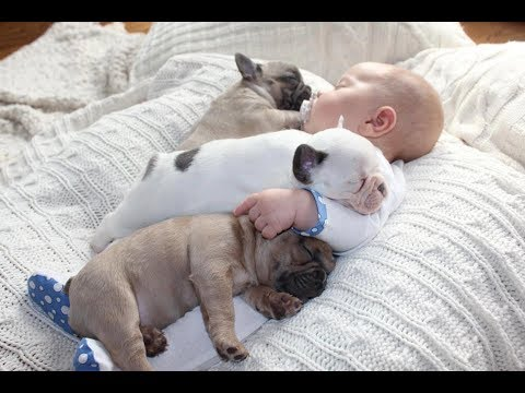 Cute Babies Sleeping With Dogs – Dog Loves Baby Videos 2017