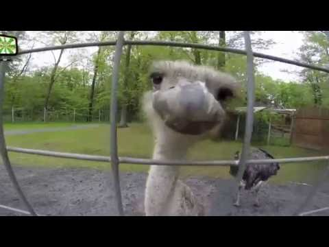 Animals attacks on humans  in Zoo