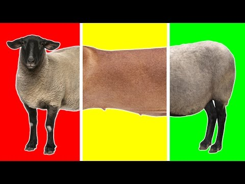 Animals On The Farm with Wrong Heads | Funny Animals for Children | Farm Animals for Kids