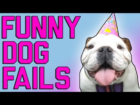 Funny Dog Fails: Man's Best Friend (May 2017)