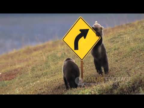 Nature Footage  Funny Wild Animals Video