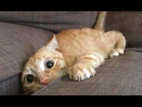 Top 10 Funny Cat Videos – Funny Cats 2017