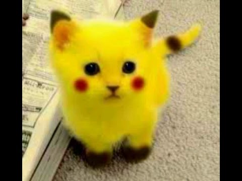 Funny Cats and Dogs Vines Best Zach King Pikachu!