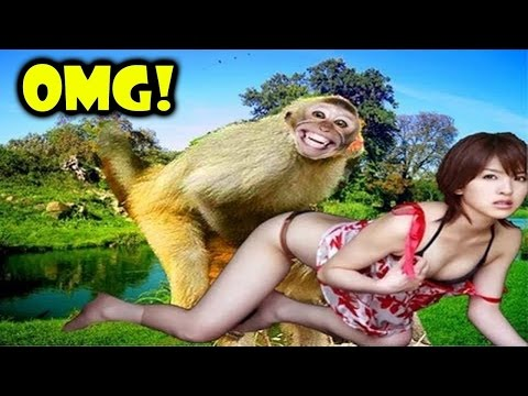 Monkey Meeting Tourist #2 – Most Amazing Wild Animal Funny Videos 2016