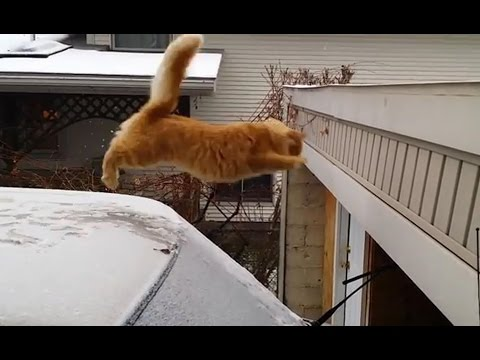 Funny Videos Of Stupid Cats Jump With Music | Hiu Hiu TV