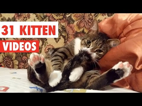 31 Cute Cats | Funny Cat Video Compilation 2017