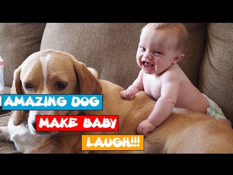 Funny Baby vs Dog Videos 2017 | AMAZING DOG make BABY CUTE FUNNY VIDEO PLAYING LAUGH COMPILATION