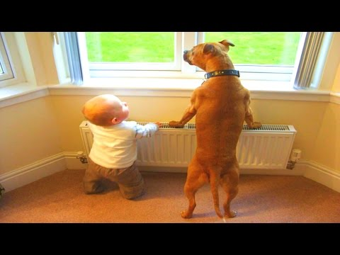 FUNNY DOGS & BABIES COLLECTION 2017