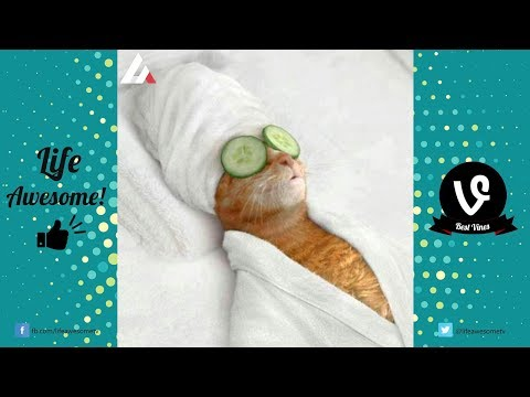 TRY NOT TO LAUGH or GRIN: Funny Animals Vines Compilation 2017 || Best Funny Dogs & Cats Videos 2017