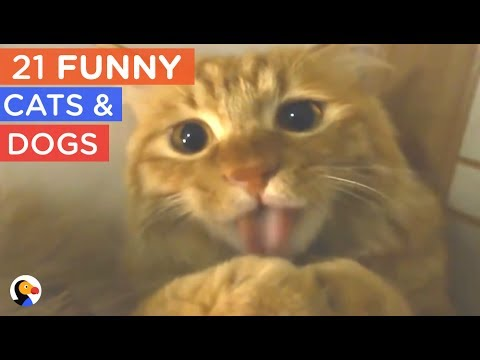 21 FUNNY Cat and Dogs Compilation – Try Not To Laugh | The Dodo Daily