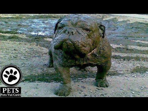 Dogs Muddy Puddles – Funny Dog videos compilation 2017 á´´á´° ✔