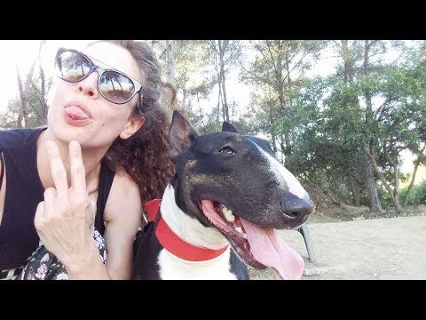 Ultimate Funny And Cute Bull Terrier Dogs Videos   Best Funny Dog Vines 2017