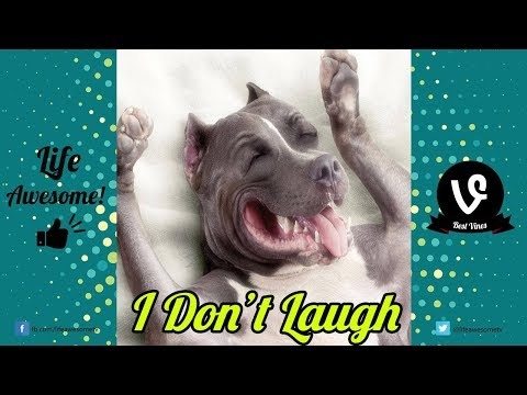 TRY NOT TO LAUGH or GRIN Watching Cute Funny Dogs Videos | Best Funny Animals Vines Compilation 2017