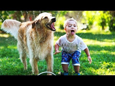 Funny Dogs 🐶  Dogs Playing With Water (FULL) [Funny Pets]