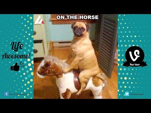 Try Not To Laugh or Grin Funny Animals Vines Compilation 2017 | Best Funny Dog Videos 2017 |