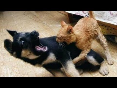 Funniest & Cutest German Shepherd Videos #9 – Compilation 2017