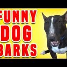 Funny Dogs Barks | Funniest Dogs Compilation