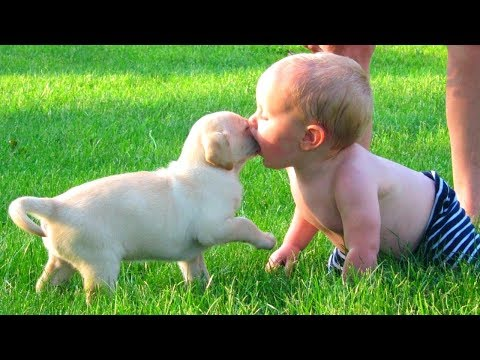 10 Funniest Dog & Baby Videos