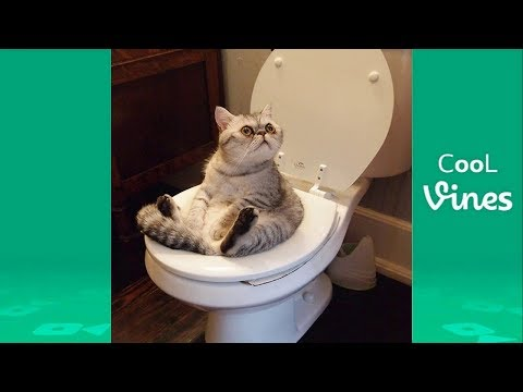 Try Not To Laugh Challenge – Funny Cat & Dog Vines compilation 2017