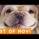 Funniest Pet Reactions & Bloopers of October 2017   Funny Pet Videos