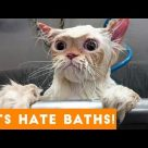Funniest Pets Hate Taking Baths Home Videos of 2017 Compilation | Funny Pet Videos