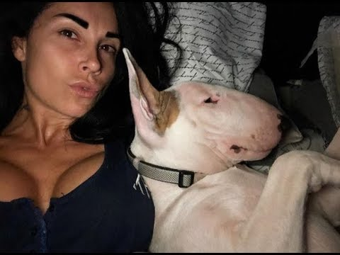 Ultimate Funny And Cute Bull Terrier Dogs Videos Best Funny Dog Vines 2018
