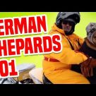 German Shepherds 101 | Funny Dog Videos