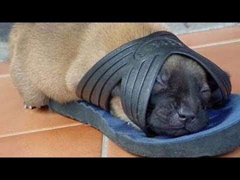 FUNNIEST DOG videos YOU have seen IN YOUR LIFE – Funny DOG compilation