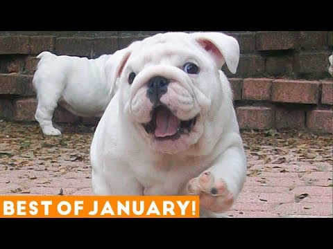 Funniest Pet Reactions & Bloopers of January 2018 | Funny Pet Videos