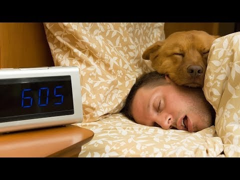 FUNNY Dogs want to sleep with owner  | Top Dogs video Compilation